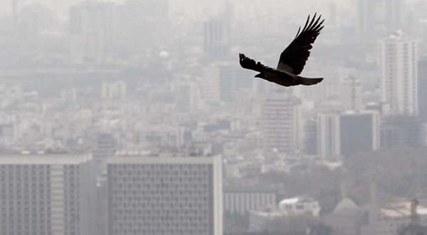 توصیههای اورژانسی در آلودگی هوا - اجاره خودرو طباطبایی