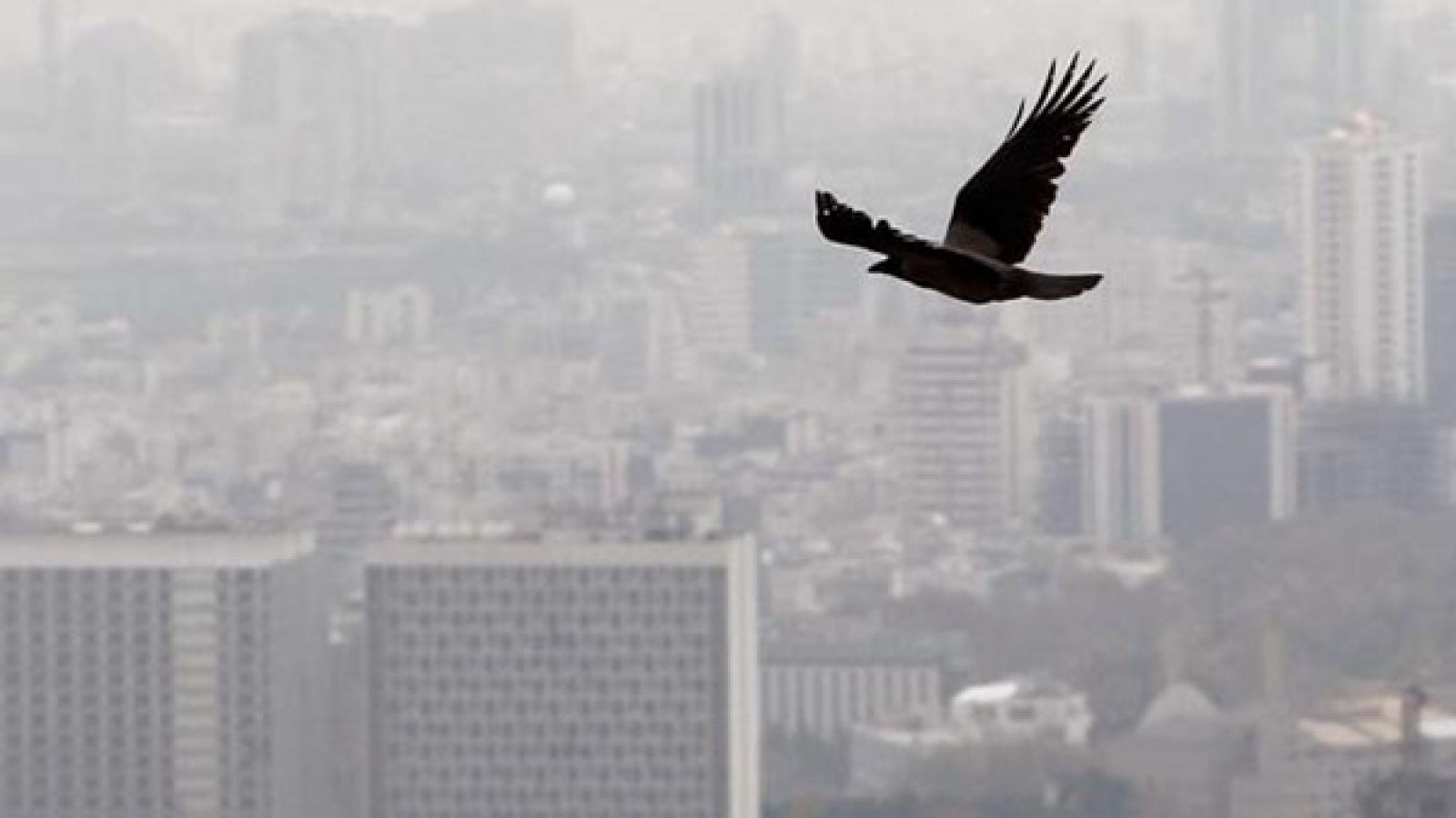خودروها بیشترین سهم را در تولید آلودگی هوای تهران دارند - اجاره خودرو طباطبایی