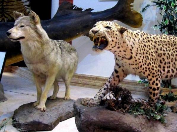 موزه حیات وحش دارآباد تهران-اجاره خودرو-اجاره ماشین