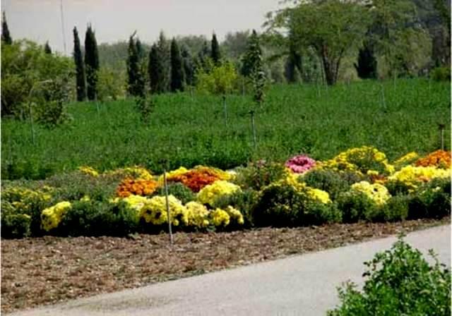 باغ موزه گیاه شناسی،باغ ملی ایران-اجاره خودرو-اجاره ماشین
