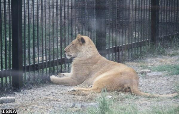 Rent Car Sari Zoo درباره ای باغ وحش ساری   اجاره ماشین
