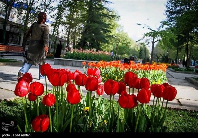 پارک ملت تهران - اجاره حودرو - اجاره ماشین