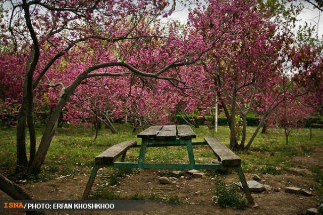 پارک لاله تهران - اجاره ماشین - اجاره خودرو